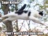 Super Kitten