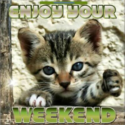 Enjoy your Weekend! Cute kitten