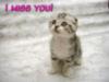 I miss you Cute kitten