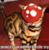 LOLCat: Princess in Nother Castle Sry