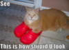 LOLCat: See. This is how stupid U look