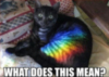 LOLCat: What Does This Mean? (Rainbow Cat)