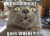 LOLCat: Thermometer... goes WHERE?!?!