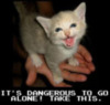 LOLCat: It's Dangerous to Go Alone! Take This.