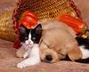 Cat & dog BFF