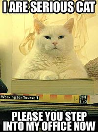 LOLCat: I are serios cat. Please you step into my office now