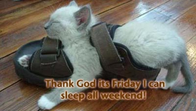 LOLCat: Thank God its Friday I can sleep all weekend!