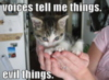 LOLCat: voices tell me things. evil things.
