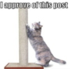 LOLCat: I approve of this post