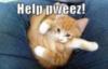 LOLCat: help pweez!