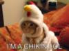 LOLCat: I'm a Chikin LOL