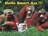 Hello Smart Ass
