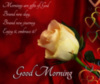Good Morning: Mornings are gifts of God Brand new day Brand new journey Enjoy it, embrace it!