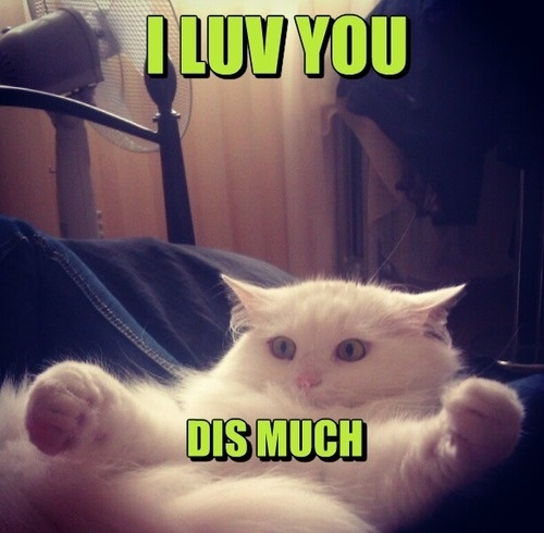 LOL cat: I LUV YOU DIS MUCH :: Funny :: MyNiceProfile.com