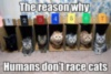 LOL cat: The reason why humans don't race cats