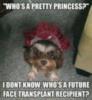 LOL Dog: Who is a pretty princess?