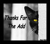 Thanks For The Add Nice Black Cat
