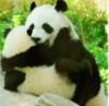 Cute Panda Hugs