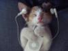 LOL Cat: Enjoy The iPod