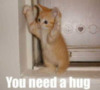 LOL Cat: You need a hug