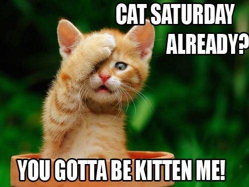Cat Saturday Already :)