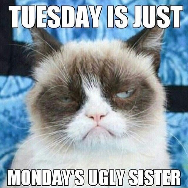Tuesday is just mondays ugly sister -- funny grumpy cat
