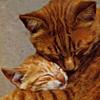 Hugs Cats