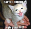 Happy Birthday -- LOL Cat