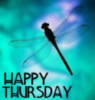 Happy Tuesday -- Dragonfly