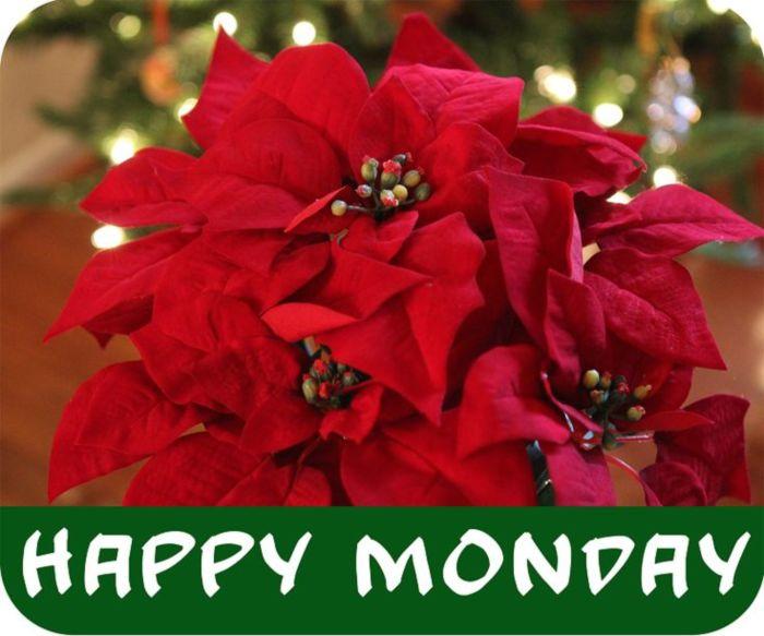 Happy Monday -- Christmas