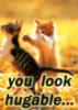 You look Hugable...