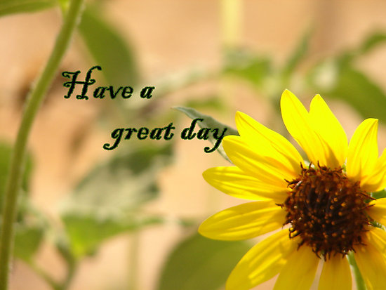 Have A Great Day -- Sunflower