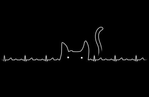 Black and White Heartbeat Cat