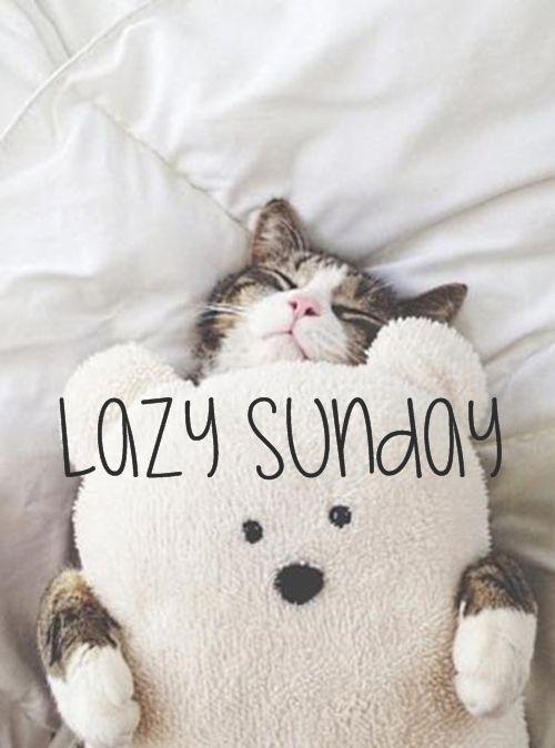 Lazy Sunday -- Funny Cat