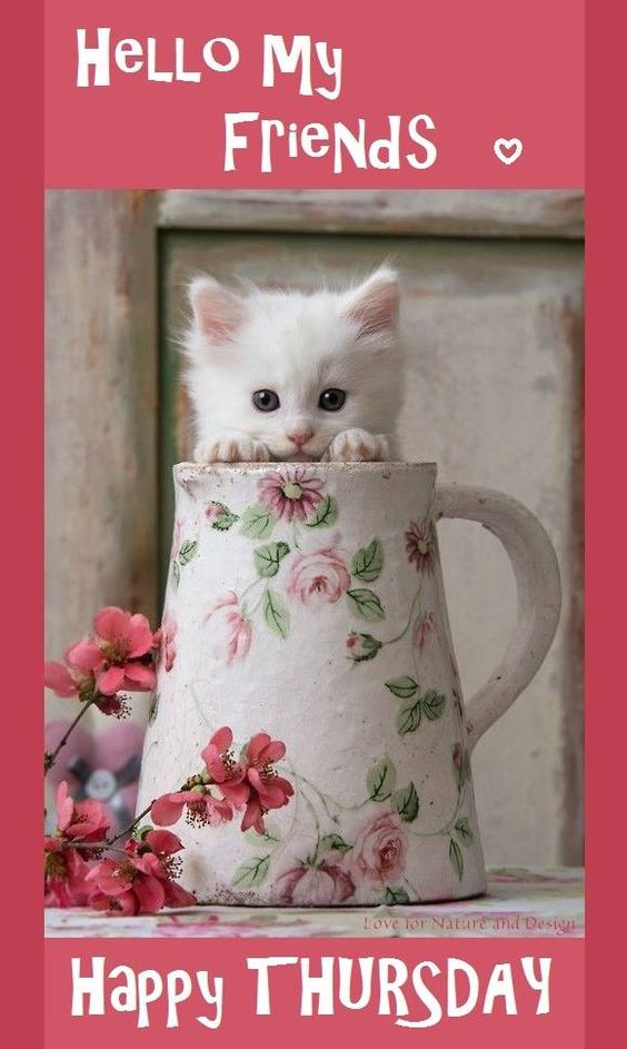 Hello My Friends. Happy Thursday! -- Cute White Kitten