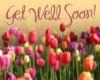 Get Well Soon! -- Flowers