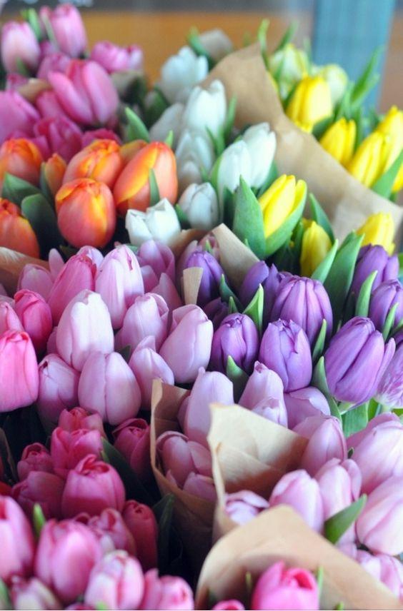 Spring Flowers -- Tulips