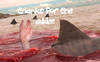 Thanks For The Add!! Sharks
