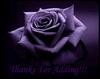 Thanks For Adding! Violet Rose