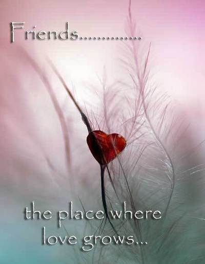 Friends .. The Place Where Love Grows