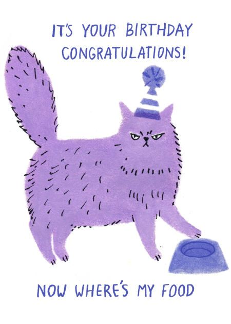 It's Your Birthday Congratulations! - Funny Cat