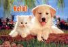 Hello! Cat Dog