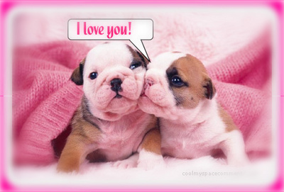 I Love You! Puppies