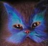 Hello Blue Cat