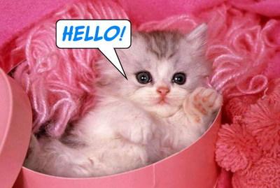 Hello Pinky Cat