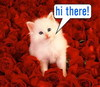 Hi There Kitty Red Roses
