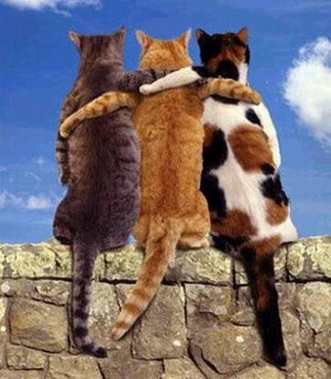 Friends Cats