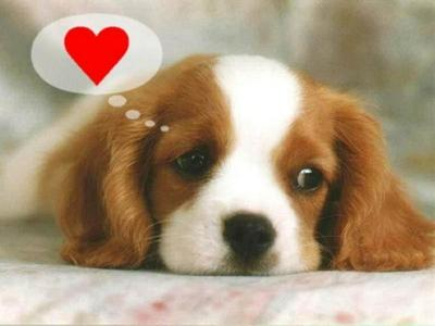 Puppy thinking about Love