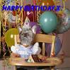 Happy Birthday Party Dog