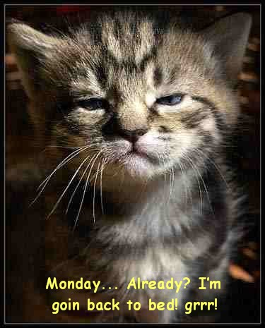 Monday Already